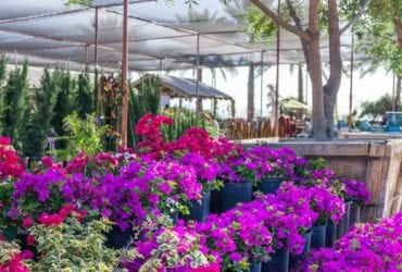 Comprehensive Exit Strategy for a Plant Nursery