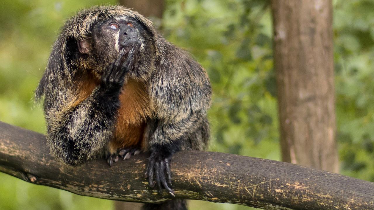 overthinking monkey